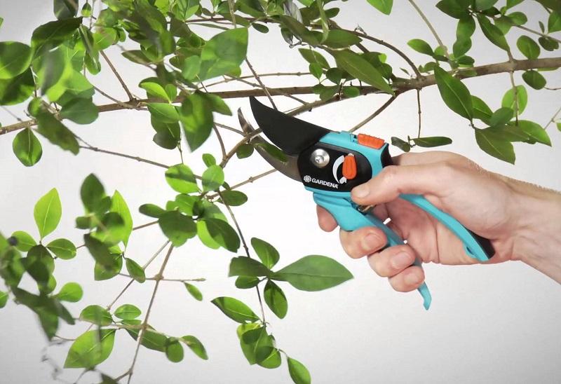 Обрезка деревьев - идея для малого бизнеса